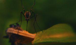 Mosquito Boss